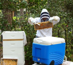 Charlotte Levine of Tallahassee, FL tending her hive