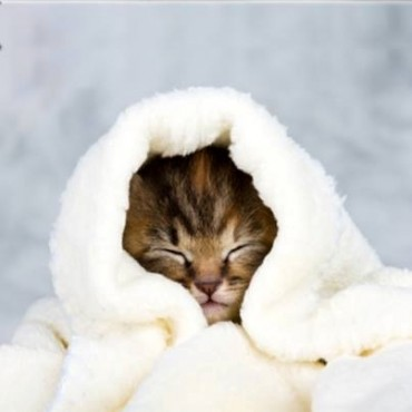 How To Keep Your GRAND Pets Safe in Cold Weather