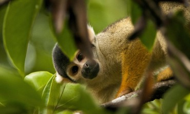 World Wildlife Fund Victory for Protecting the Amazon for Life