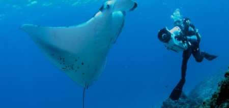 Blue, Ocean film festival and conservation summit