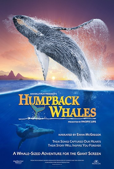 Love Whales? You'll Love Humpback Whales