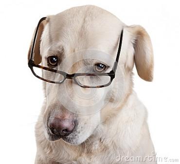 I Hate Glasses!