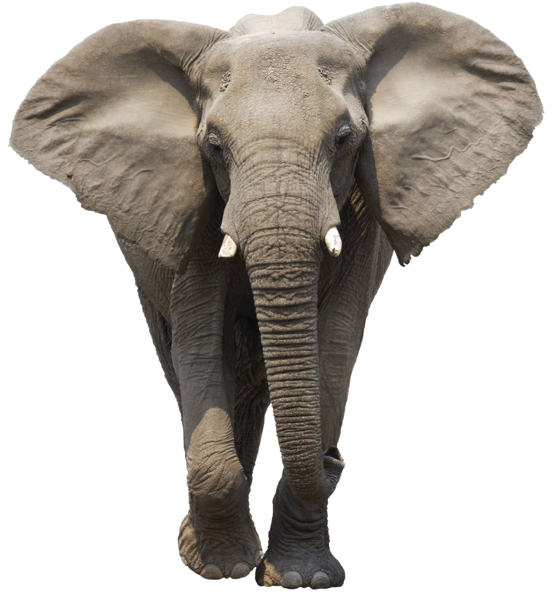 How is your memory mental state take this test - Image elephant ...