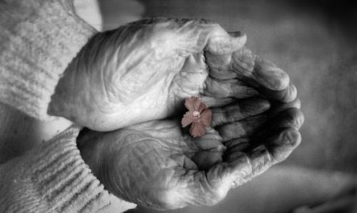 Grandma's Hands – A Story for All Generations