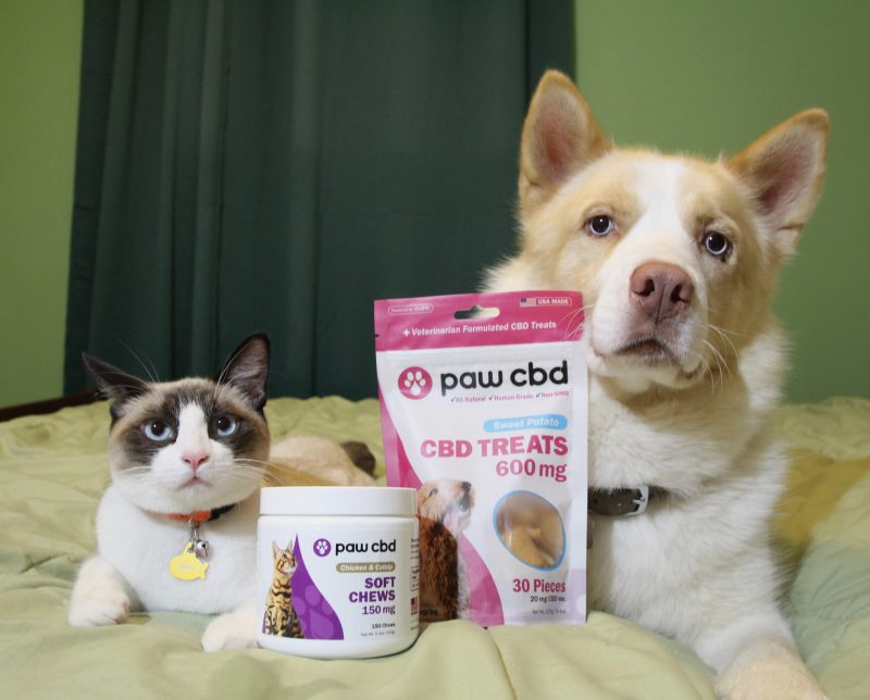 Can CBD Help Your Pets Too?