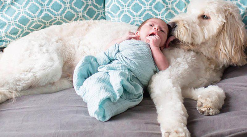 Can Popular Baby Names Make Best Dog Names?
